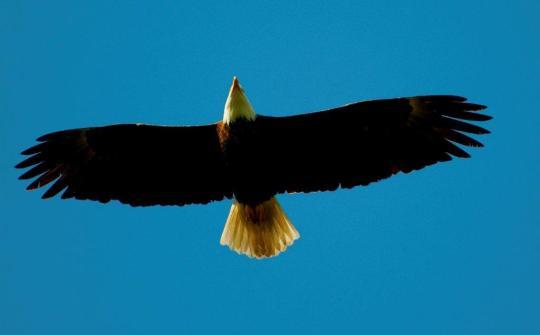 Eagle Blessings