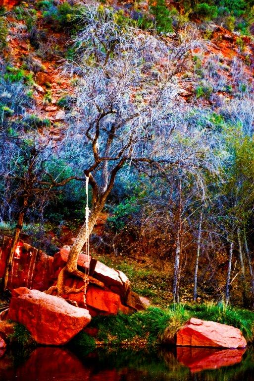 Tree Magic of Sedona by stephenbrunophotography.com