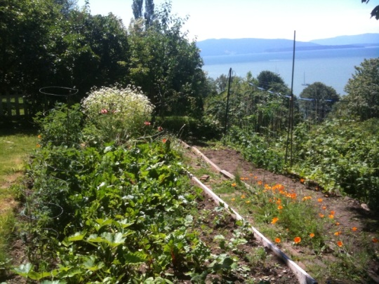 The backyard bayside vegetable garden