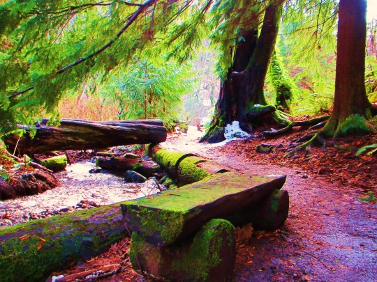 One of my favorite places to visit, the Faery Bridge of Carkeek Park in Seattle