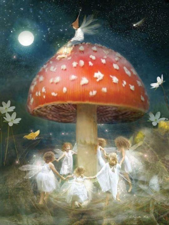 faery mushrrom