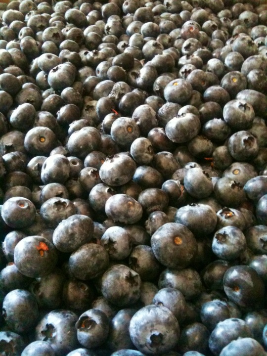A Bounty of Organic Blueberries