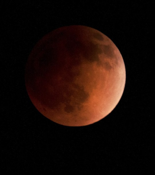 Full Blood Moon Eclipse, photo by Stephen Bruno